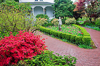 House and gardens. Cherry Blossoms. Hulda Klager Lilac Gardens, Woodland, Washington