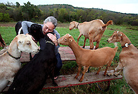 Lois Reichert greets some of her goats at Reichert's Dairy Air, her farm near Knoxville, Iowa.  Reichert makes Robiola there- an Italian-style goat cheese- she the only U.S. cheesemaker producing it.