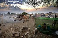 Nuer children under a mosquito net early in the morning, with their families' cattle resting nearby. The owners light small fires fuelled by cow dung in the 'cattle camp', so that the smoke keeps tsetse flies away. After sunrise the young boys will escort the cows to their grazing grounds. Cattle are the most important asset to the nomadic people of southern Sudan.
