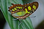 Costa Rica Flora, Birds & Butterflies
