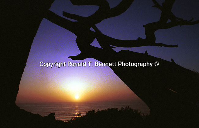 """Torrey Pines California sunset with old rugged tree in foreground, Torrey Pines California sunset with pine tree in foreground, La Jolla California,  California Fine Art Photography by Ron Bennett, Fine art Photography and Stock Photography by Ronald T. Bennett Photography ©, FINE ART and STOCK PHOTOGRAPHY FOR SALE, CLICK ON  """"ADD TO CART"""" FOR PRICING, California, West Coast of US, Golden State, 31st State, California, Fine Art Photography by Ron Bennett, Fine Art, Fine Art photography, Art Photography, Copyright RonBennettPhotography.com ©"""