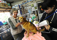 Elizabeth Oliver with a dog rescued from the nuclear evacuation zone at the ARK animal refuge outside Osaka, Japan, 26th May 2011.  ARK has rescued more than 200 dogs, 16 cats and a guinea pig from with-in the nuclear exclusion zone surrounding the Fukushima Daiichi nuclear power plant in Japan...© Richard Jones/ sinopix.PHOTO BY SINOPIX