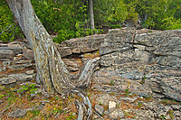 Limestone rock along Georgian Bay (Lake Huron)  at Halfway Log Dump. Bruce Peninsula.<br />