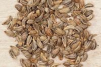 Petersilie, Samen, Saatgut, Petroselinum crispum, syn. Petroselinum sativum, Parsley, garden parsley