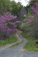 Spring blooms alongside a road.
