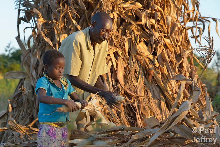 Joseph Nkhoma and his daughter Beauty, 8, shuck corn they have harvested on their farm in Edundu, Malawi. They and other farmers in the village have benefited from intercropping and crop rotation practices they learned from the Malawi Farmer-to-Farmer Agro-Ecology project of the Ekwendeni Mission Hospital AIDS Program, a program of the Livingstonia Synod of the Church of Central Africa Presbyterian.