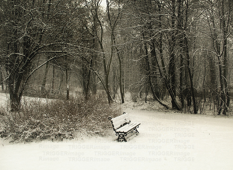 A view to a lonely bench covered with snow, situated in a desolate garden.