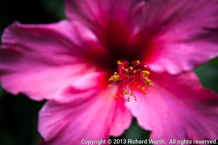 Close focus on the pistil of a hibiscus flower, at its top, the red stigma and yellow anther.