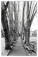 Avenue of trees leading to church with bench in foreground.