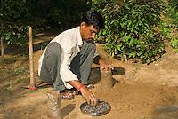 Jatropha curcas plantation