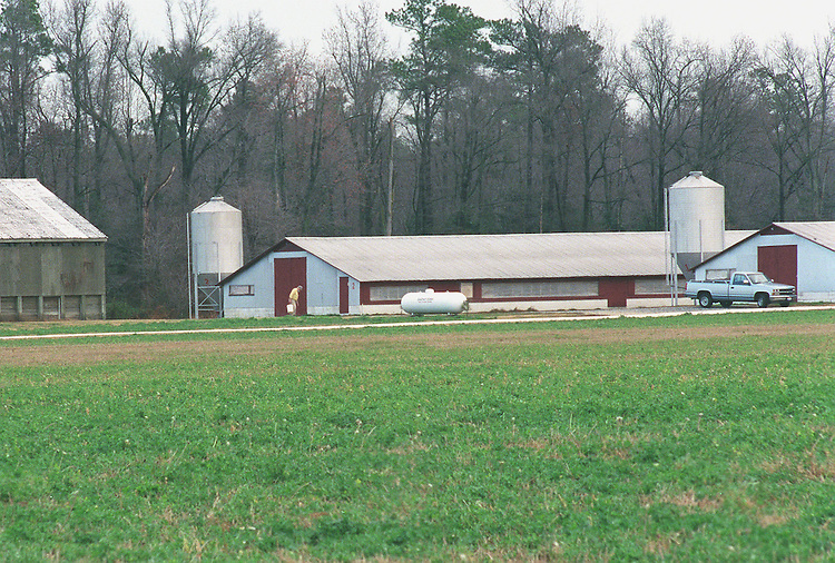 12-8-98.POULTRY INDUSTRY TAX CREDITS--Sussex County,.Delaware chicken farm. Senate Finance Chairman William V. Roth Jr. is proposing giving a tax credit to companies that convert poultry manure into energy. The plan would be added to a bill in 1999 extending energy and other tax credits. Supporters say the credit would help Delaware and other states solve the enviornmental problems associated with disposing poultry waste..CONGRESSIONAL QUARTERLY PHOTO BY DOUGLAS GRAHAM