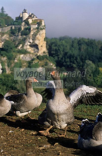 Europe/Europe/France/Midi-Pyrénées/46/Lot/Vallée de la Dordogne/Env du château de Belcastel: Troupeau d'oies de la ferme du Berthou