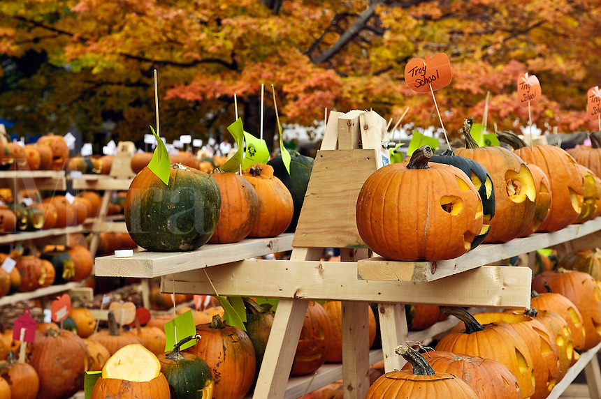 Pumpkin festival, Keene, Cheshire County, New Hampshire, NH, USA