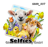 Howard, SELFIES, paintings+++++,GBHR897,#Selfies#, EVERYDAY ,eastern,sheeps