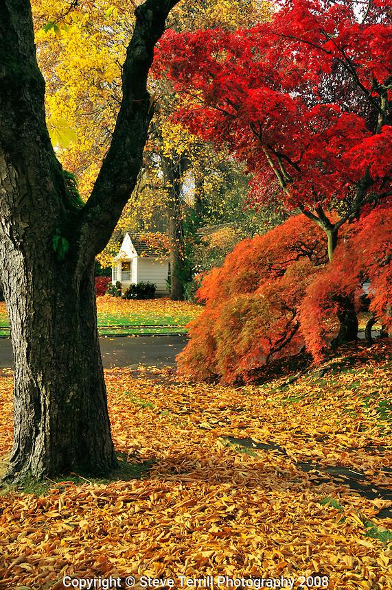 Fall colors along Knott Street in Portland Oregon
