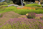 GARDEN OF HEATH AND HEATHER, CALLUNA AND ERINUS HYBRIDS