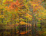 Delaware Water Gap National Refuge Area, PA/NJ<br /> Deciduous trees with autumn colored leaves reflecting in a still pool near the Delaware River