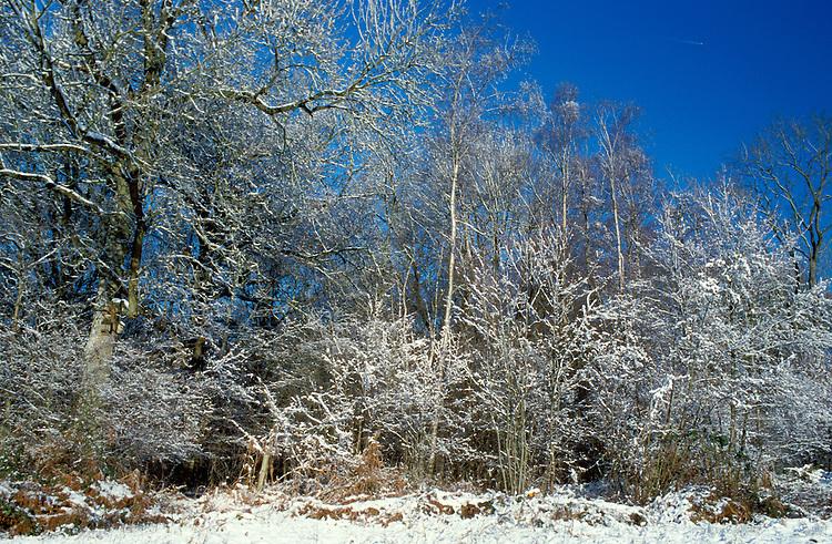 Deciduous Woodland in Winter