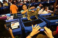SAO PAULO, SP, 08.03.2014 - EXPOSIÇÃO DE GATOS -  Exposição do Clube Brasileiro do Gato, no Clube Homs, em São Paulo, neste sábado. (Foto: Bruno Ulivieri / Brazil Photo Press).