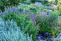 France, Hautes-Alpes (05), Villar-d'Arène, jardin alpin du Lautaret, zone des plantes d'Amérique du Nord