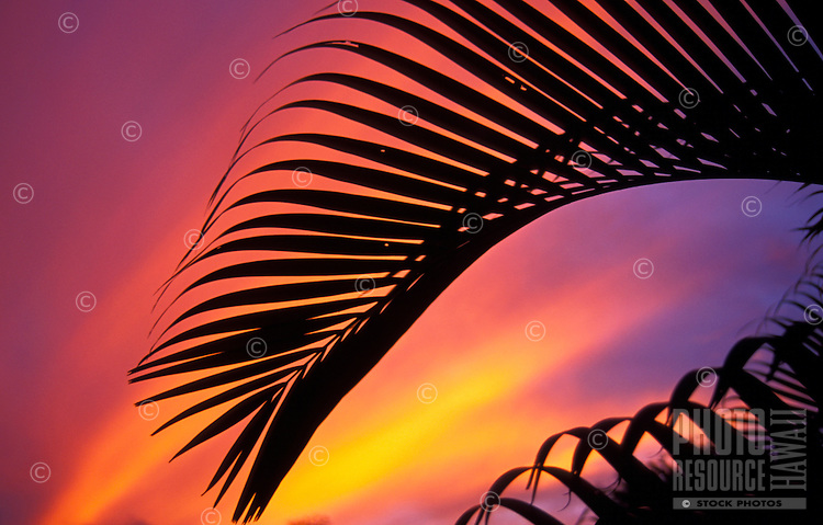 A silhouette of palm fronds backed by sunset colors
