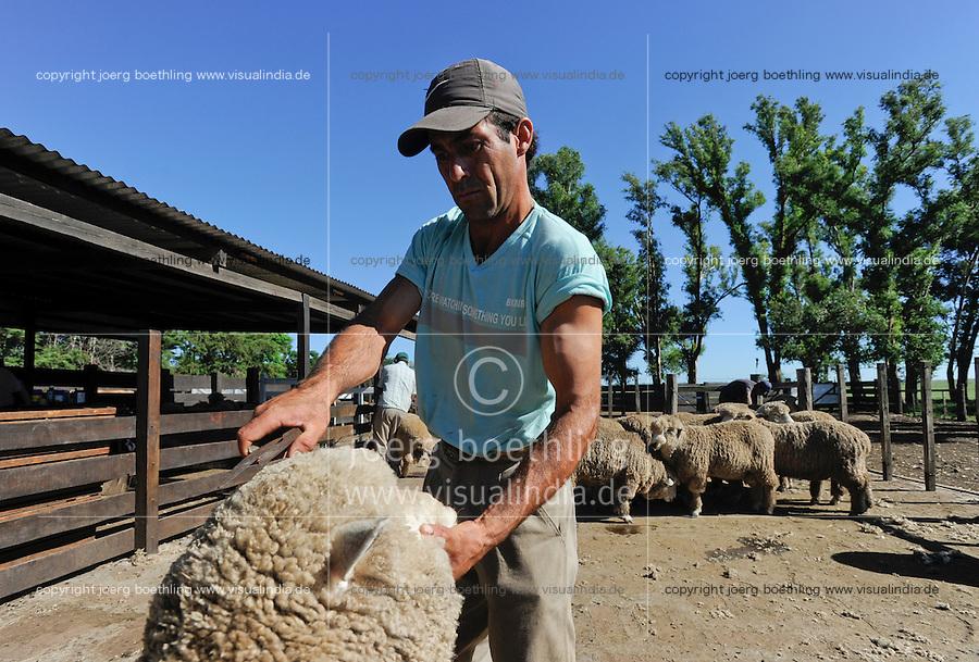 URUGUAY Estancia La Magdalena bei Salto, 18.ooo Hektar Farm, Schafschur  / .URUGUAY Estancia La Magdalena near Salto, 18.000 hectares farm, wool cutting of Merino sheps
