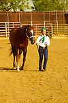 Mariposa Fair Show Horse 2015