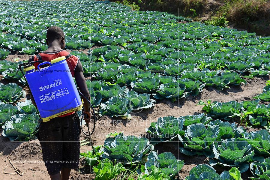 MALAWI, Thyolo, village Samuti, farmer sprays with mobile canister chemical pesticides in salad field / MALAWI, Thyolo, Dorf Samuti, bewaessertes Salat Feld, Farmer versprueht Pestizide mit Kanister