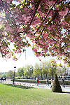 Notre Dame Park in Spring, Paris, France