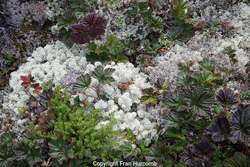 ground cover, moss and lichen
