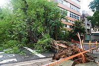 SÃO PAULO,SP, 24.11.2015 - TRÂNSITO-ARVORE - Uma árvore de grande porte caiu na rua Teixeira da Silva em Cerqueira César região centro-sul de São Paulo, nesta terça-feira, 24. Ninguém ficou ferido. (Foto: William Volcov/Brazil Photo Press)