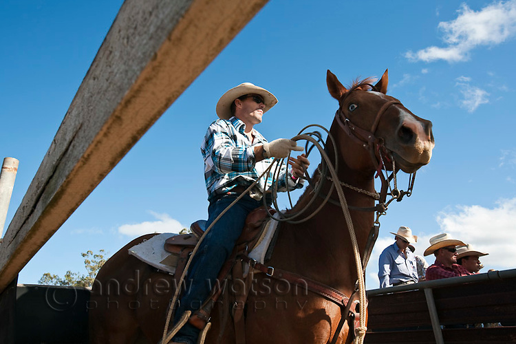 Cowboy on horseback with lasso in hand during calf-roping competition.  Mt Garnet Rodeo, Mt Garnet, Queensland, Australia