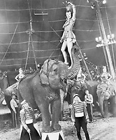 """""""The Greatest Show on Earth"""" won the OscarÆ for Best Picture of 1952, and was the first film to receive this honor on live television as the 25th Academy AwardsÆ presentation was the first ceremony to be telecast.  Gloria Grahame (top) starred in the film as Angel the elephant girl while Lyle Bettger (right foreground) played Klaus the elephant trainer. Restored by Nick & jane for Dr. Macro's High Quality Movie Scans Website: http:www.doctormacro.com. Enjoy!"""