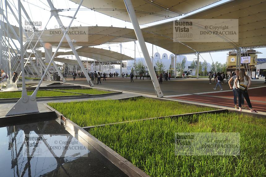 - Milano, Esposizione Mondiale Expo 2015, cluster tematico del riso<br /> <br /> - Milan, the World Exhibition Expo 2015, thematic cluster of rice