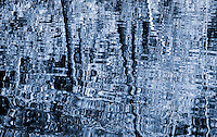 """""""BLUE LACE TRICKERY""""<br /> <br /> (1) 42 X 30 canvas print $3,500<br /> (1) 36 X 24 canvas print $2,800<br /> <br /> 17 x 12.5 signed paper print<br /> 1/50 $126.00<br /> <br /> <br /> <br /> <br /> <br /> <br /> Forest reflection on a lake look like lace."""
