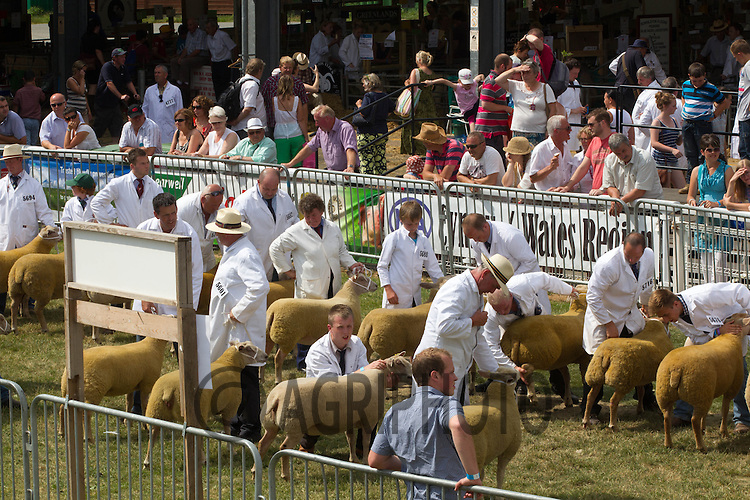 Showing sheep at the Royal Welsh Show 2013<br /> Picture Tim Scrivener 07850 303986
