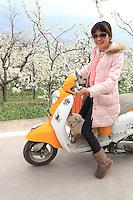 Dans les vergers, une route permet l'accès des touristes. Une jeune femme très branchée sur son scooter préfigure la Chine de demain. Un jour, la pollinisation à la main sera trop chère.///In the orchards, a road allows for tourist access. A young, very trendy woman on her scooter prefigures the China of tomorrow. One day, hand pollination will be too costly.