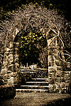 Vine-covered old stone archway at Van Dusen Botanical Garden.