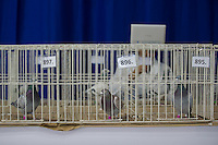 Birds wait in their cages for inspection by judges during the 34th Pigeon Olympiad held in Budapest, Hungary on January 15, 2015. ATTILA VOLGYI