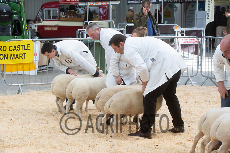 ©Tim Scrivener Photographer 07850 303986<br />      ....Covering Agriculture In The UK....