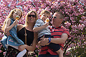 05/05/16 <br /> <br /> Lucia Pryme (6) with mum Lisa Whitsed and Max Pryme (7) with dad Carl Pryme . <br /> <br /> Taking a stroll and enjoying an ice-cream under a cherry blossom tree in the May sunshine at Matlock Bath, in the Derbyshire Peak District<br /> All Rights Reserved: F Stop Press Ltd. +44(0)1335 418365   +44 (0)7765 242650 www.fstoppress.com