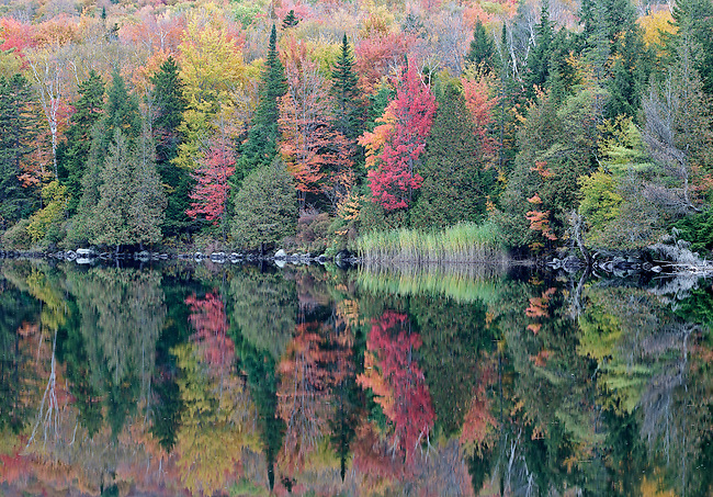Autumn color at Ricker Pond in Groton State Park, Vermont.