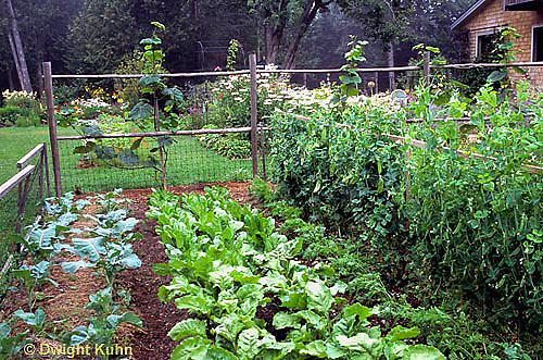 HS18-127x  Vegetable garden