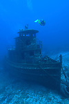 Grand Bahama Island, The Bahamas; a scuba diver swims over La Rose Wreck, viewed from the bow, this 50 foot, triple decker tugboat was intentionally sank in 2006 as an artificial reef by UNEXSO and sits upright in 95 feet of water
