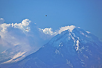A Horned Puffin flies above Mount Redoubt, an active volcano in Lake Clark National Park, Alaska.