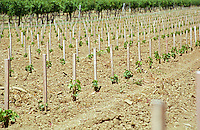 recently planted vines chateau de castelnau entre deux mers bordeaux france