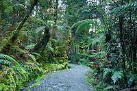A track through rainforest surrounding Lake Matheson near Fox Glacier - Westland National Park, West Coast, New Zealand