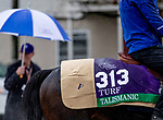 November 1, 2018: Talismanic (GB), trained by Andre Fabre, exercises in preparation for the Breeders' Cup Turf at Churchill Downs on November 1, 2018 in Louisville, Kentucky. Carolyn Simancik/Eclipse Sportswire/CSM