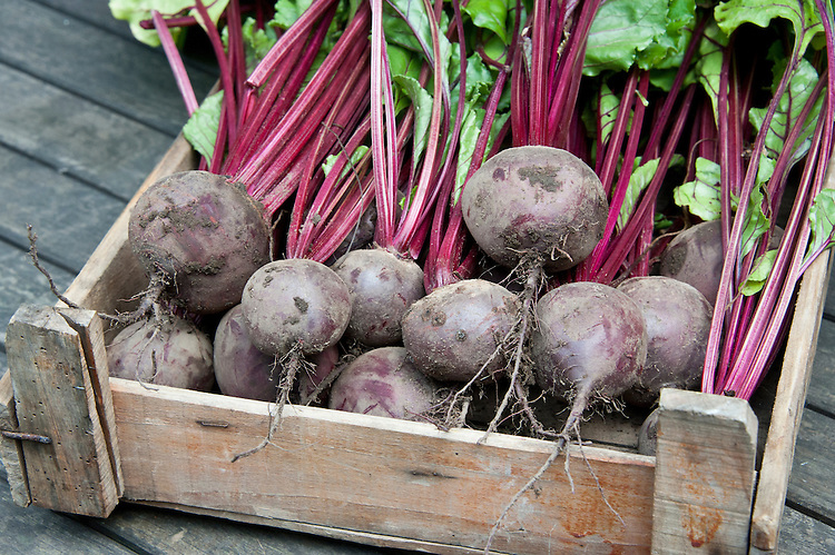 A wooden crate of freshly harvested 'Action' beetroot.