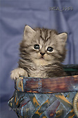 Carl, ANIMALS, photos, kitten, pot(SWLA3063,#A#) Katzen, gatos